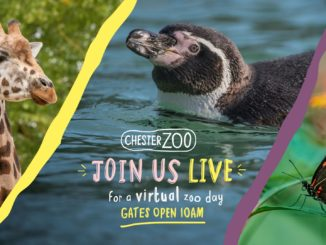 Chester Zoo Live